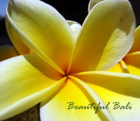 beautiful bali flower